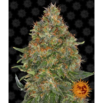 Barney's Farm Pineapple...