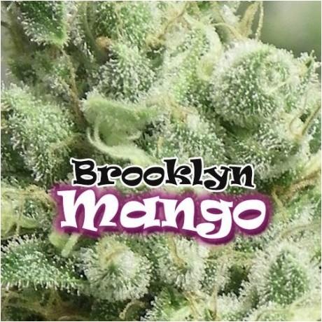 Dr. Underground Brooklyn Mango Feminizada