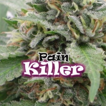 Dr. Underground Pain Killer...