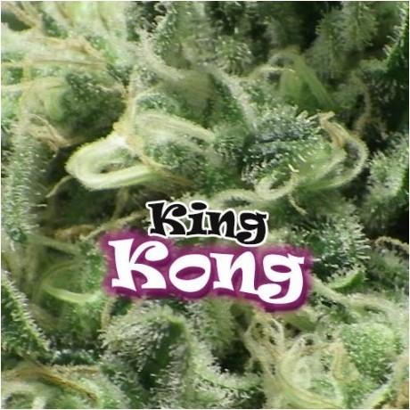 Dr. Underground King Kong Feminizada