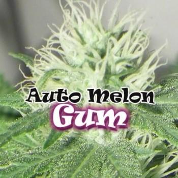 Dr. Underground Melon Gum...