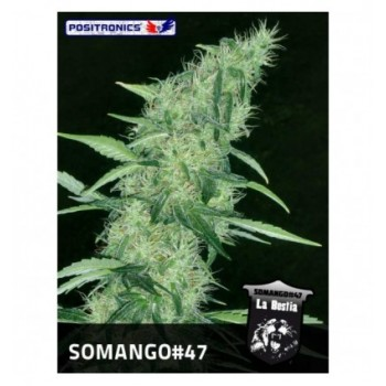 Positronics Somango 47...