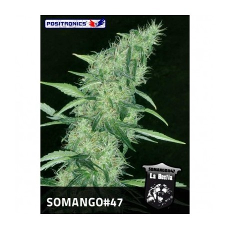 Positronics Somango 47 Feminizada