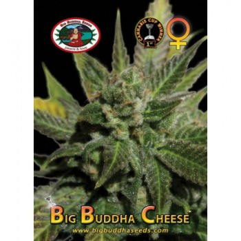 Big Buddha Seeds Cheese...