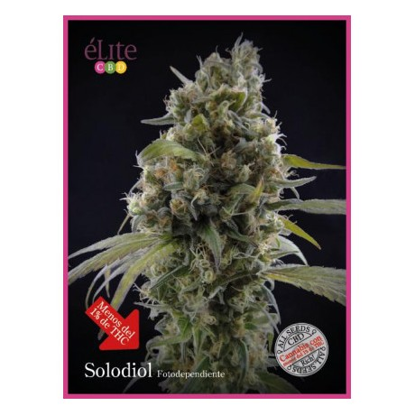 Elite Seeds Solodiol CBD Feminizada