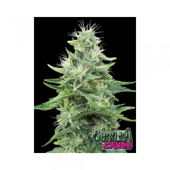 Eva Seeds Gorilla Candy...