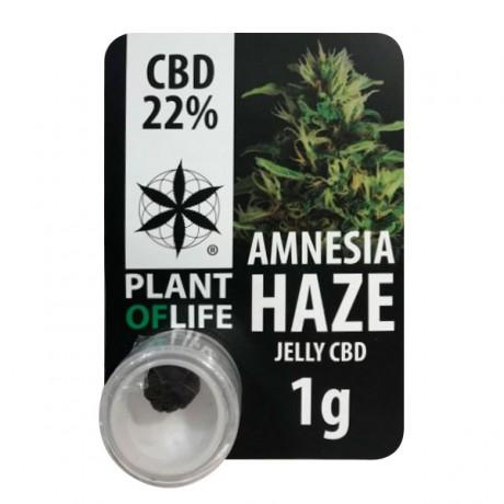 CBD Polen Plant of Life 22% Amnesia Haze