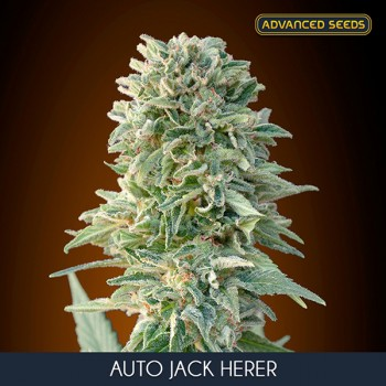 Advanced Jack Herer Auto...